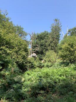 Roarr! Dinosaur Theme Park – Amazing Norfolk Days out Part 3