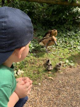 Thrigby Hall Wildlife Gardens – Great Norfolk Days out Part 4